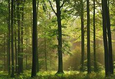 1art1 40585 - Carta da parati fotografica, motivo foresta autunnale, 8 unità, dimensioni 368 x 254 cm 1art1 http://www.amazon.it/dp/B000YYTE4K/ref=cm_sw_r_pi_dp_HEW7vb1ZJP9ZH