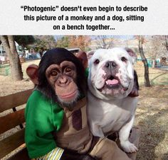 Photogenic Friends (that's not a monkey, it's a chimp)