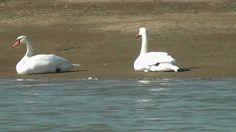 Aves da Reserva Natural do Estuário do Tejo, Novembro de 2011.