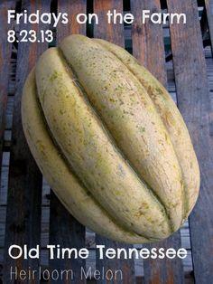 Fridays on the Farm 8.23.13- Heirloom melons, fall garden planning.
