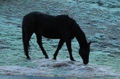 Seniorita on a cold frosty morning.