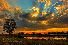 the day sunset by JinHoKim5 #photo