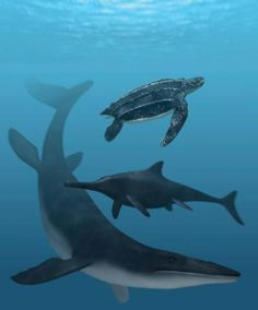 Top to bottom: Turtle (Testudine); Ichthyiosaur, Middle Triassic - Late Cretaceous (245 - 90 Ma), Discovered by Blainville, 1835; Mosasaur, Late Cretaceous, Discovered by Gervais, 1853