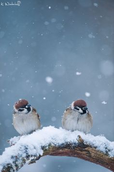 together in winter
