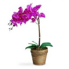 Arranjo de flores artificiais orquideas roxa cachepot madeira 45x15 cm