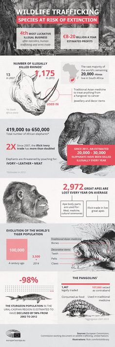 Species at risk because of wildlife trafficking