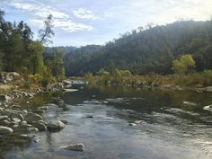 The colors are magnificent along the Yuba River near French Bar Rice's Crossing Preserve. A bald eagle was observed soaring just above the water. Learn more about the preserve here: http://www.bylt.org/land/rices-crossing-preserve/
