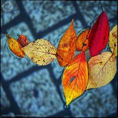 autumn, squared