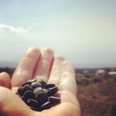 Our friend @evelinruns love her bits in Hawaii!