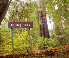 Na wypadek gdyby samemu ciężko było ocenić rozmiar drzewa:))))