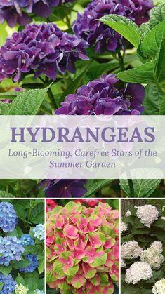 Hydrangea Color Change, Hydrangea Colors, Hydrangea Care, Hydrangea Potted, Unique Garden Decor, Garden Yard Ideas, Hydrangea Landscaping, Home Landscaping, Planting Succulents