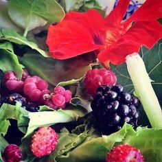 My daily #salad. Heute mal mit #Beere #Brombeere #Himbeere #Melone #Endivie und #Kapuzinerkresse. #salat #leichtekost #vegan #veggie #foodie #foodista #instagarden #garten #mamirocks #mamablogger #Fitness #Ernährung #Gemüse  #Regram via @mamirockt