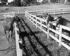 It's lonely at the top: Triple Crown winner Omaha (left) watches other Claiborne Farm horses from his paddock