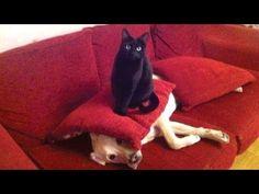 De leukste dierenvideo's bij Hart voor Dieren