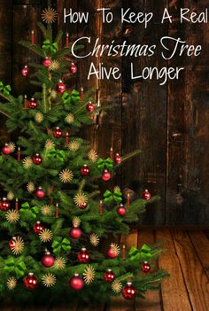 HOW TO KEEP A REAL CHRISTMAS TREE ALIVE LONGER | http://just2sisters.com/keep-a-real-christmas-tree-alive/