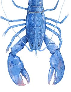 Blue Lobster - archival print from watercolor painting - 11x14 Archival Print - on 11x17 Paper - Signed and dated - Works in a mat or frame window