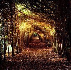 Beautiful Tunnel Vision...