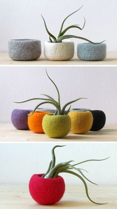 12 Elegant Ways To Bring Air Plants Into Your Home // These felted bowls make great holders for air plants, and because they come in a wide selection of colors, they can match any color scheme.
