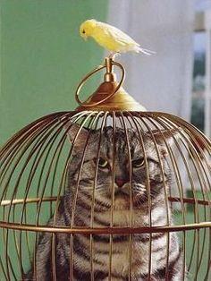 yatahonga.com chat canari cat yellow bird cage piège trap kat falle vogel