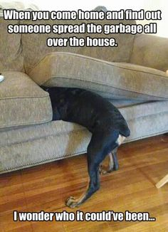 funny pics | animal pictures | dog | couch