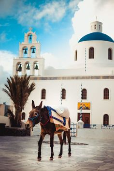 Mule in Oia, Santorini, Greece. Greece Cruise, Greece Travel, Empire Ottoman, Greece Photography, Wedding Destination, Crete Greece, Beautiful Places To Travel, Vacation Places, Adventure Is Out There