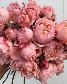 Bouquet of flowers Flowers Nature, My Flower, Beautiful Flowers, Tout Rose, David Austin Roses, Flower Aesthetic, Pink Peonies, Peony, Planting Flowers