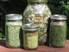gathering flowers herbs