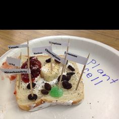 Week 4 Edible Plant Cell model