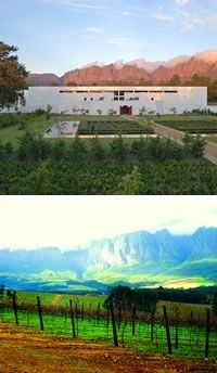 Lourensford Wine Estate in Somerset West: Wine Estate, Restaurant, Coffee Experience, Art Studio Frans Groenewald and Healey's Cheese