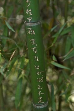 Bamboo Graffitti | Chinese poets leaving their work in bamboo groves at the tops of mountains.