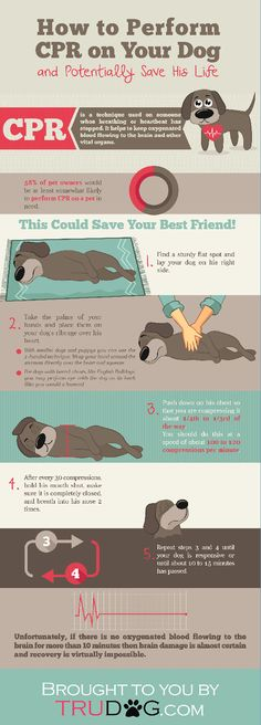 Do you know how to save your dog's life? How to Perform CPR on Your Dog