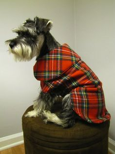 Tartan to keep a handsome doggie warm :)