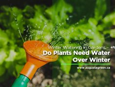 need water -- but do they need it in the Find out whether it's right for you to water your during the season or if you should wait for the spring thaw. Plant Needs, Irrigation, Lighting, Spring, Winter, Garden, Plants, Blog, Winter Time