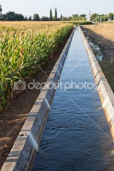 Irrigation canal on corn field — Stock Image #51199277