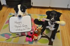 Dali & I want to wish everyone a Happy Turkey Day!