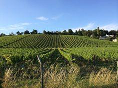 Vineyards in Vienna's hills | © lafilledevienne / pixabay
