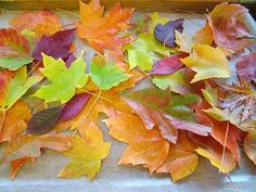 fall leaves preserved in beeswax Patch O' Dirt Farm: Tutorial: What to do with all those pretty leaves Autumn Crafts, Nature Crafts, Holiday Crafts, Holiday Ideas, How To Preserve Leaves, Diy Wax, Leaf Crafts, Leaf Art, Autumn Inspiration