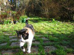 For Lorie's cat Blinken  -- calico cat pictures photos 148 Calico Cat Pictures Photos Picture Photo, Corgi, Pets, Animals, Corgis, Animales, Animaux, Animal, Animais