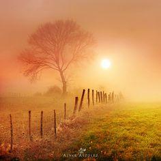 Golden fog - Landscape Photography by Alvar Astúlez Sunrise Photography, Landscape Photography, Nature Photography, Beautiful World, Beautiful Places, Beautiful Pictures, Beautiful Scenery, Photos Voyages, Green Landscape