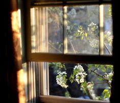 The morning light moves up so slowly and peeks in my bedroom windows...The sunrise is so naughty! :)