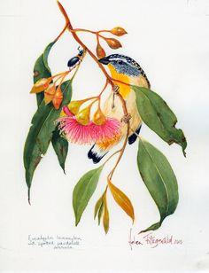 E leucoxylon spotted pardalote 1134 Australian Wildflowers, Australian Native Flowers, Australian Birds, Botanical Drawings, Botanical Prints, Plant Illustration, Watercolor Illustration, Art Graphique, Illustrations