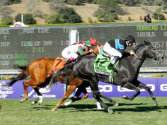 Mizdirection beats the boys for the second year in a row in the @Breeders' Cup Turf Sprint!
