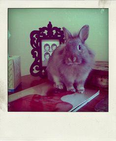 baby rabbit bunny sweet thing