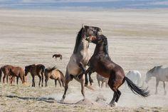 Wild Horse Photo Tour / Guided Sightseeing Tours Salt Lake City, Utah