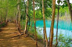 美瑛青い池へ絶景を求めて・・・美瑛青い池への詳しいアクセス方法教えます!! - Find Travel