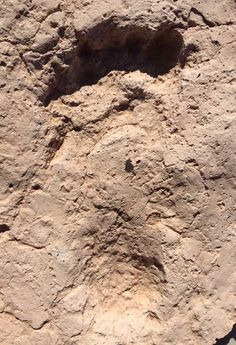 Oldest Human Footprints in the Southwest Discovered at Tucson Construction Site