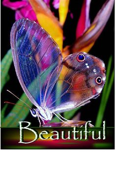 Funny pictures about The amber phantom butterfly. Oh, and cool pics about The amber phantom butterfly. Also, The amber phantom butterfly. Beautiful Bugs, Beautiful Butterflies, Amazing Nature, Beautiful World, Simply Beautiful, Beautiful Person, Amazing Art, Beautiful Creatures, Animals Beautiful