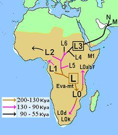 Ancient History/Human Evolution/Recent African Origin - Wikibooks, open books for an open world