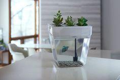 Self Cleaning Betta Aquarium: Self Cleaning Aquaponics Fish Tank   RealCoolGadgets.com