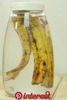 Banana Peel to Recover Your Dead Plant Banana Shell for Recovering Your Dead Plant the >Read Garden Bulbs, Garden Plants, Orchids Garden, Indoor Garden, Indoor Plants, Organic Gardening, Gardening Tips, Kitchen Gardening, Gardening Services